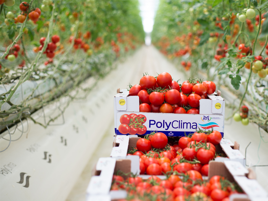Poly Clima Greenhouse